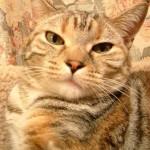 羊毛フェルトで愛猫を作る