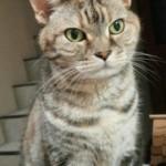 実家の愛猫 モモさん
